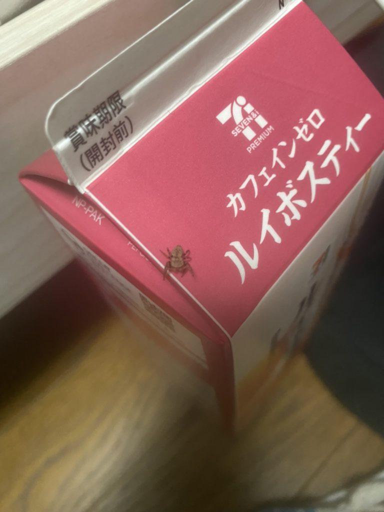 カラスハエトリ(12月/不明)