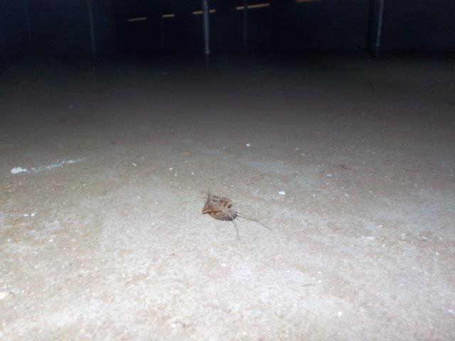 No.205,浴室床下,ゴキブリ,ホウ酸,千葉県八街市